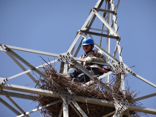 架空输电线路鸟害防治措施